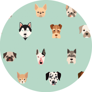 Rejestracja zwierząt domowych